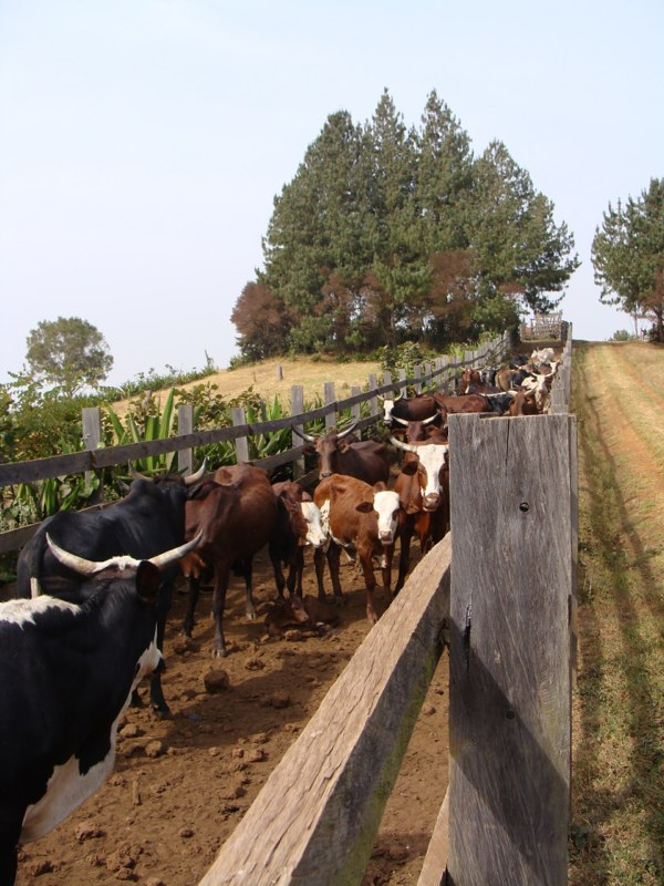 looking up at livestock path from the entrance gate