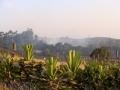 Smoke from farm nearby