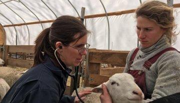 livestock-farm-animal-wellness-exam-3806